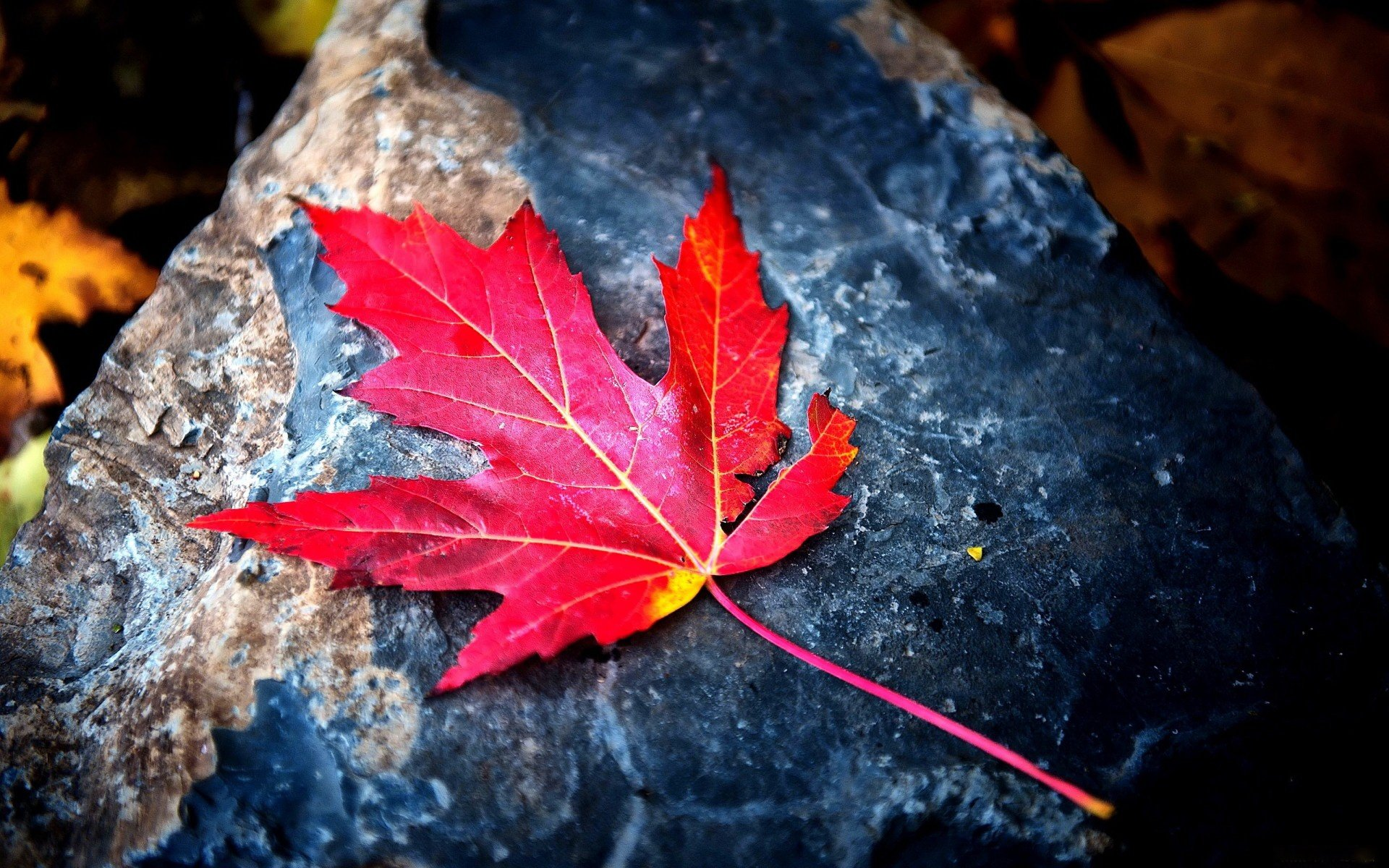 red-leaf-backgrounds-wallpapers