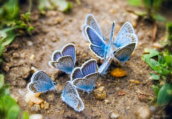 Beautiful Butterfly Photography
