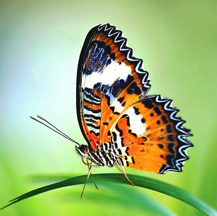 butterfly-photos