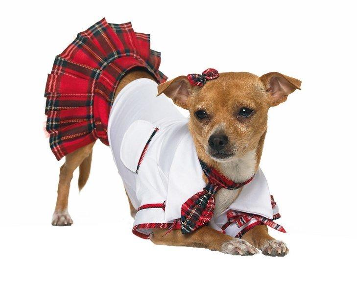 Dog Dress
