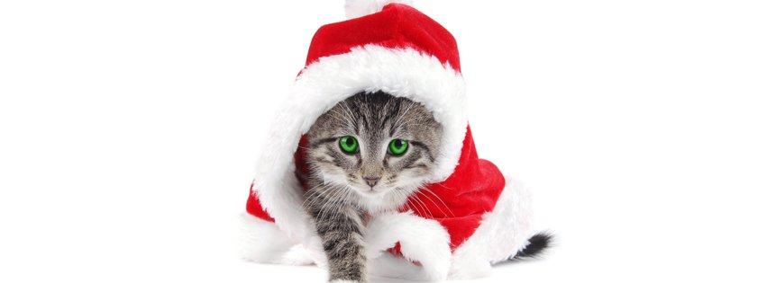 fb cat Timeline cover photos for christmas
