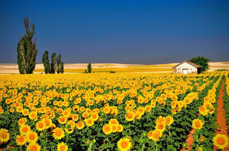 25 Stunning Landscapes (19)