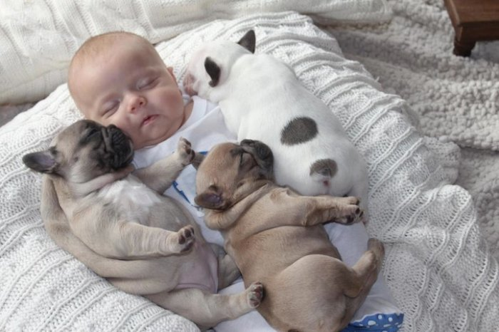 baby with french bulldog puppies (7)