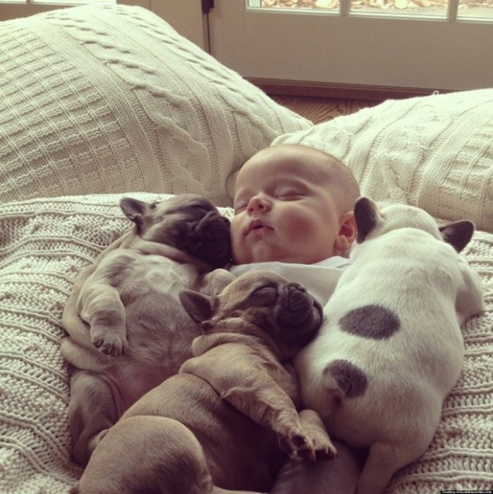 baby with french bulldog puppies (3)