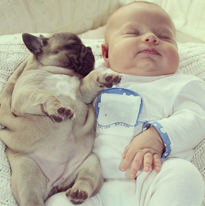baby with french bulldog puppies (2)