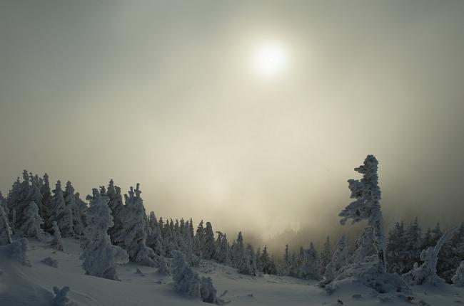 Winter Photographs (20)