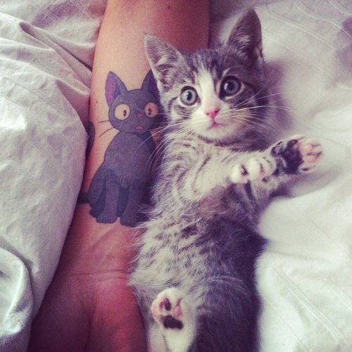 Beautiful Cat Tattoos (5)