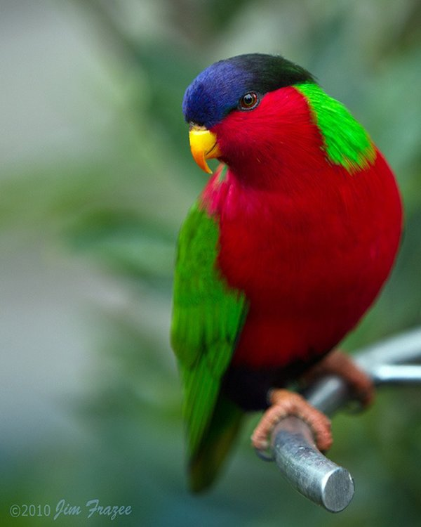 Colorful Animals Photography (45)