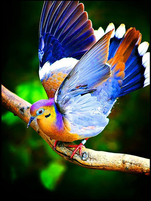 Colorful Animals Photography (29)