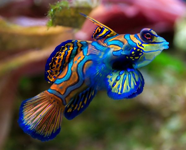 Colorful Animals Photography (24)