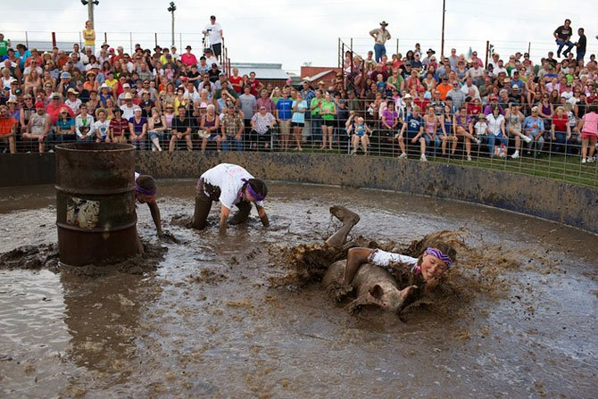 The fight with the pigs in the mud. Virokva, Wisconsin.