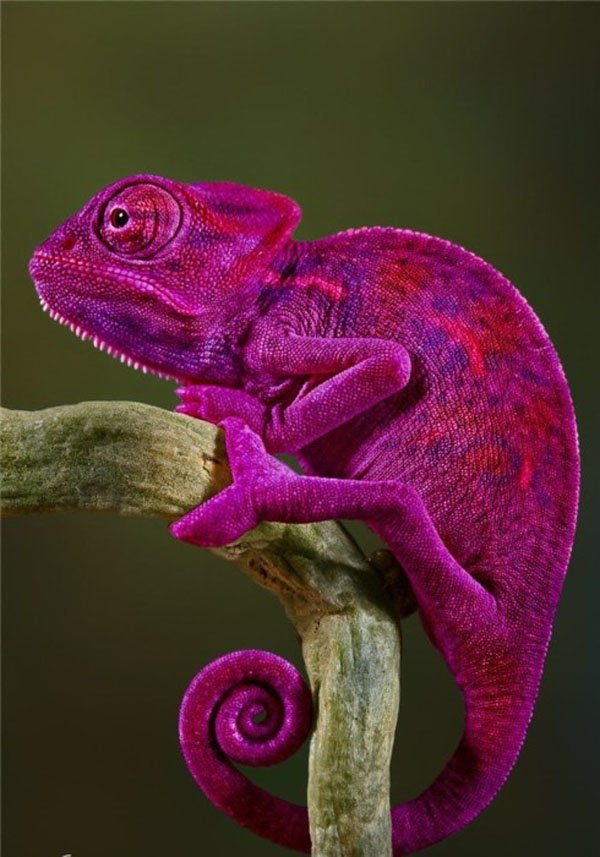 Colorful Animals Photography (18)