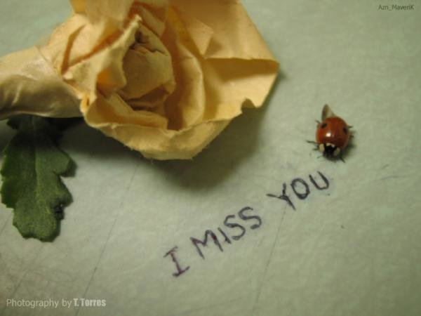 I Miss You So Much (3)