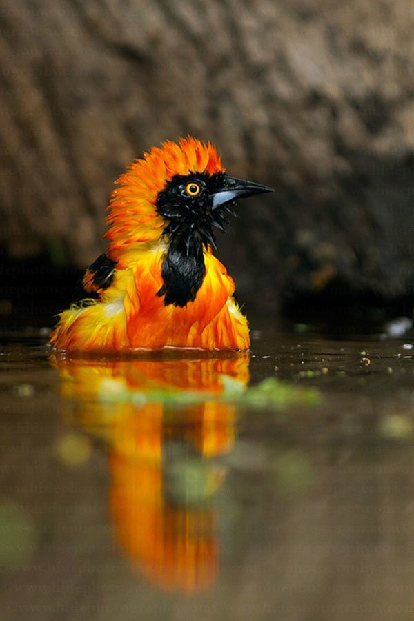 Colorful Animals Photography (5)