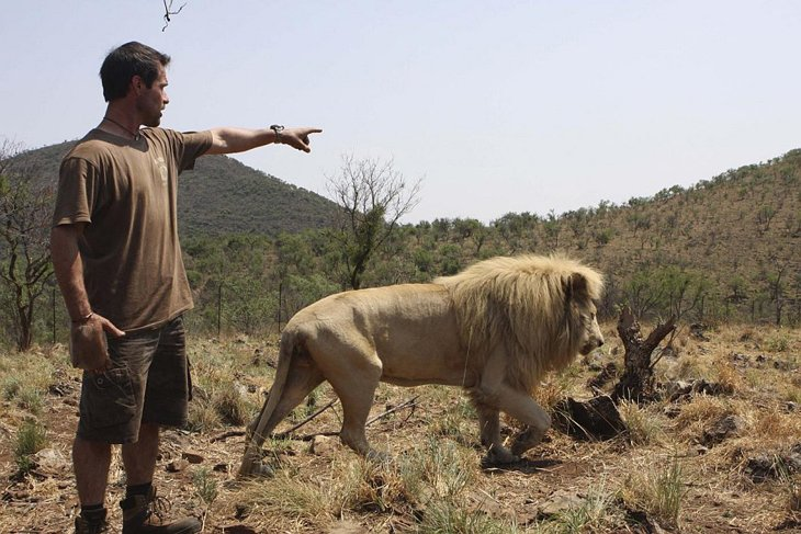 Kevin Richardson, The Lion Whisperer  (28)