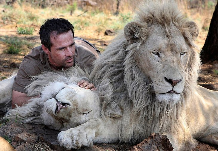 Kevin Richardson, The Lion Whisperer  (27)