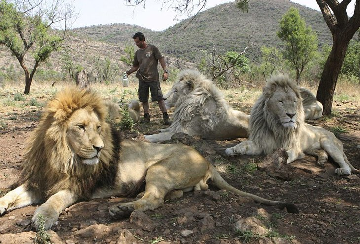 Kevin Richardson, The Lion Whisperer  (24)
