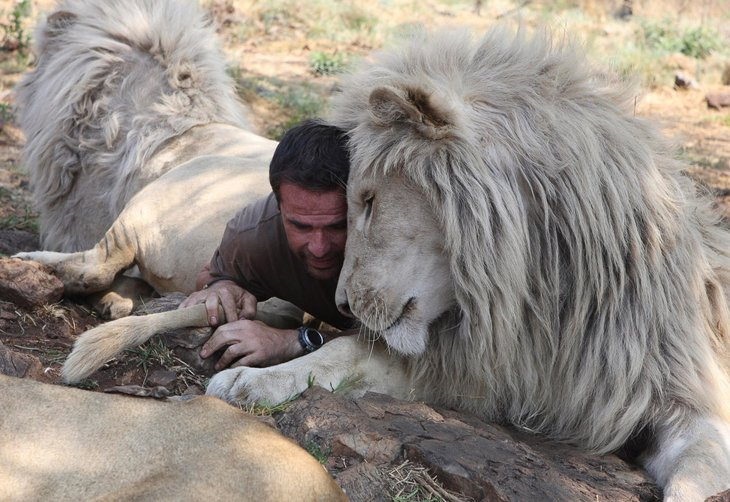 Kevin Richardson, The Lion Whisperer  (23)