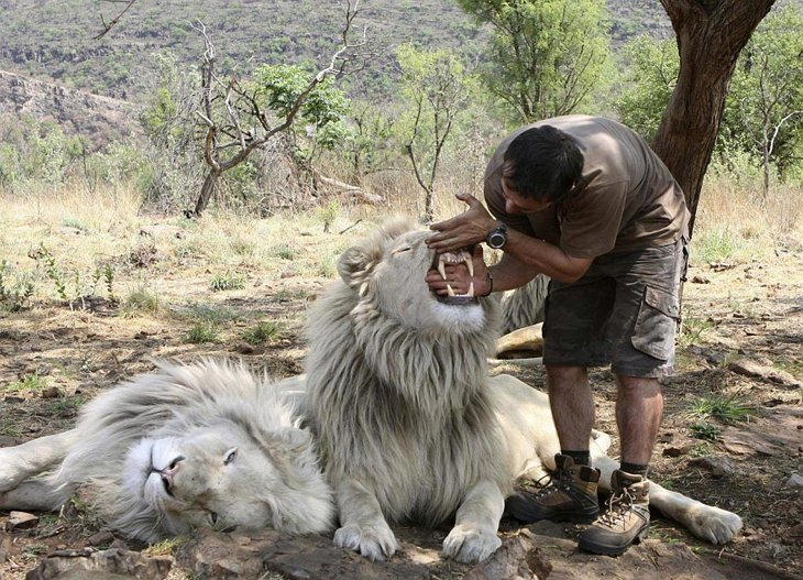 Kevin Richardson, The Lion Whisperer  (21)