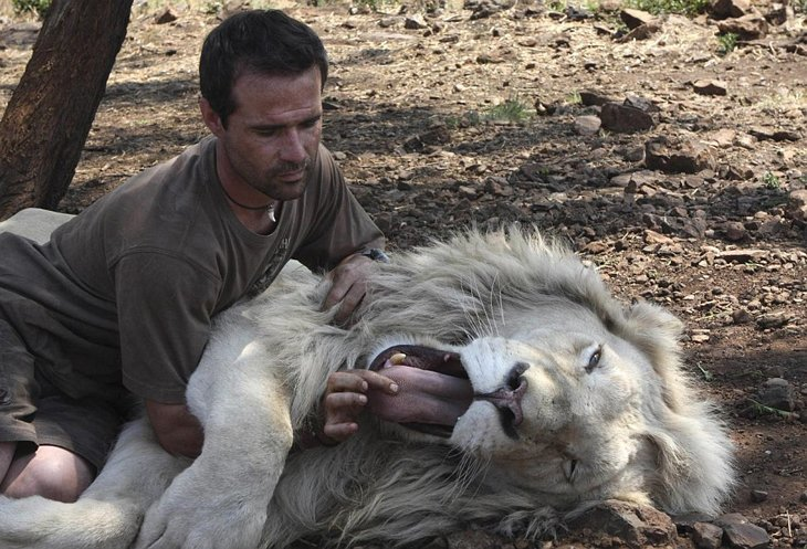 Kevin Richardson, The Lion Whisperer  (16)