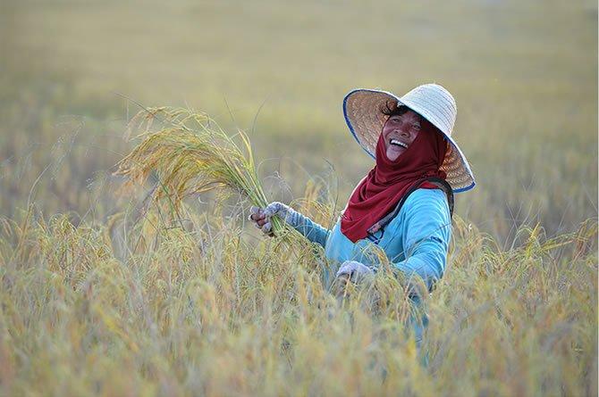 Smile of farmer