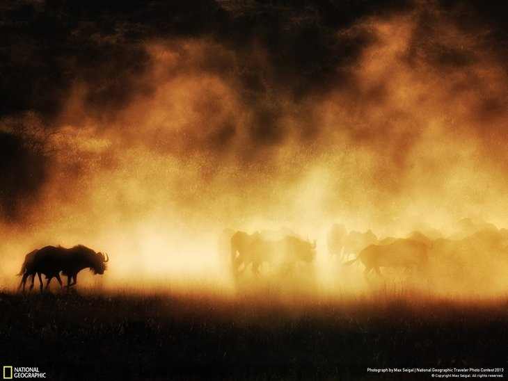 natgeocontest18 35 Most Spectacular Wildlife Photos