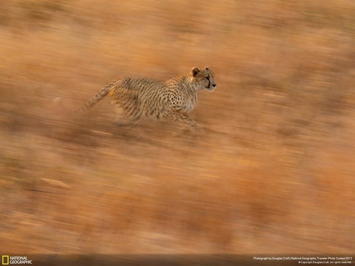 natgeocontest26 35 Most Spectacular Wildlife Photos