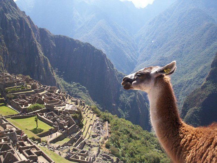 10 animals with the most beautiful views (7)