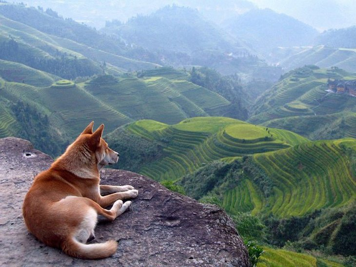 10 animals with the most beautiful views (1)