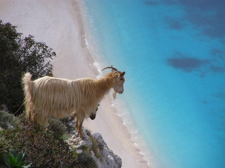 10 animals with the most beautiful views (8)