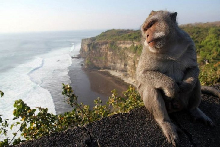 10 animals with the most beautiful views (2)