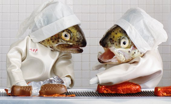 Real Fish Heads Used In Photographs  (8)