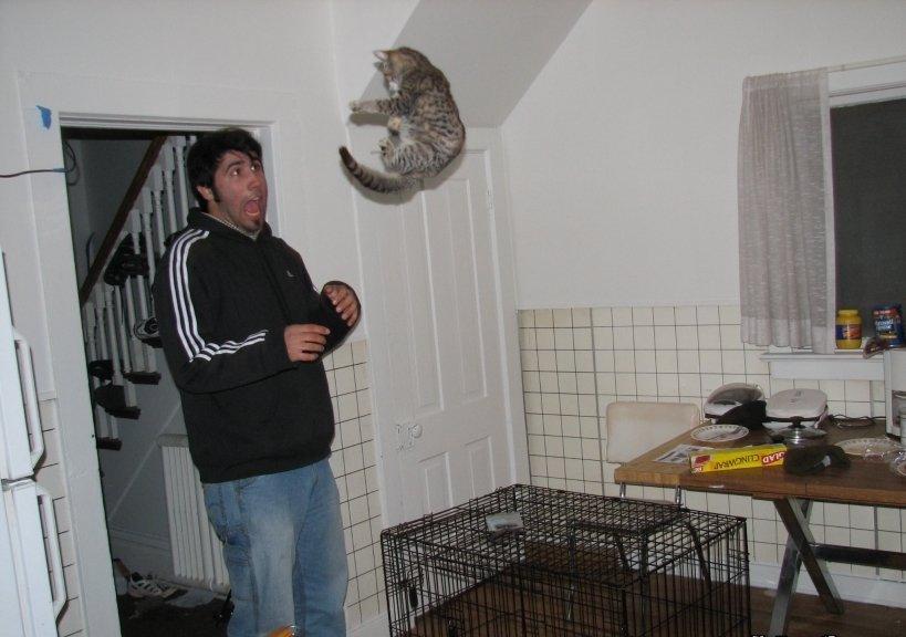 Beware of Animals Attacks (34)