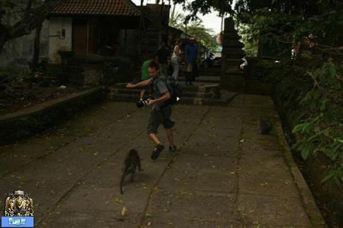 Beware of Animals Attacks (33)