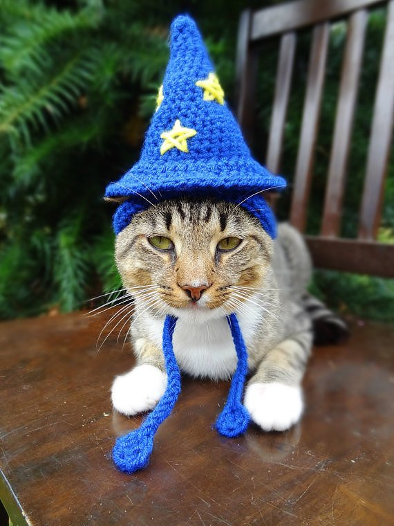 Beautiful Halloween Pet Costumes (23)