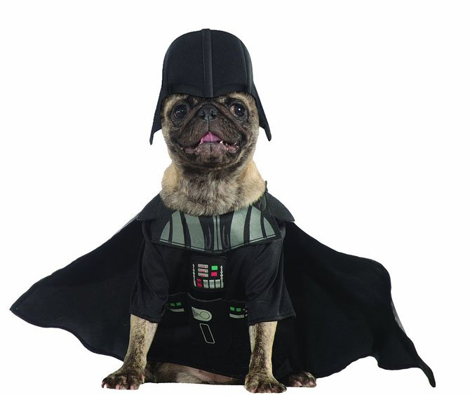 Beautiful Halloween Pet Costumes (18)