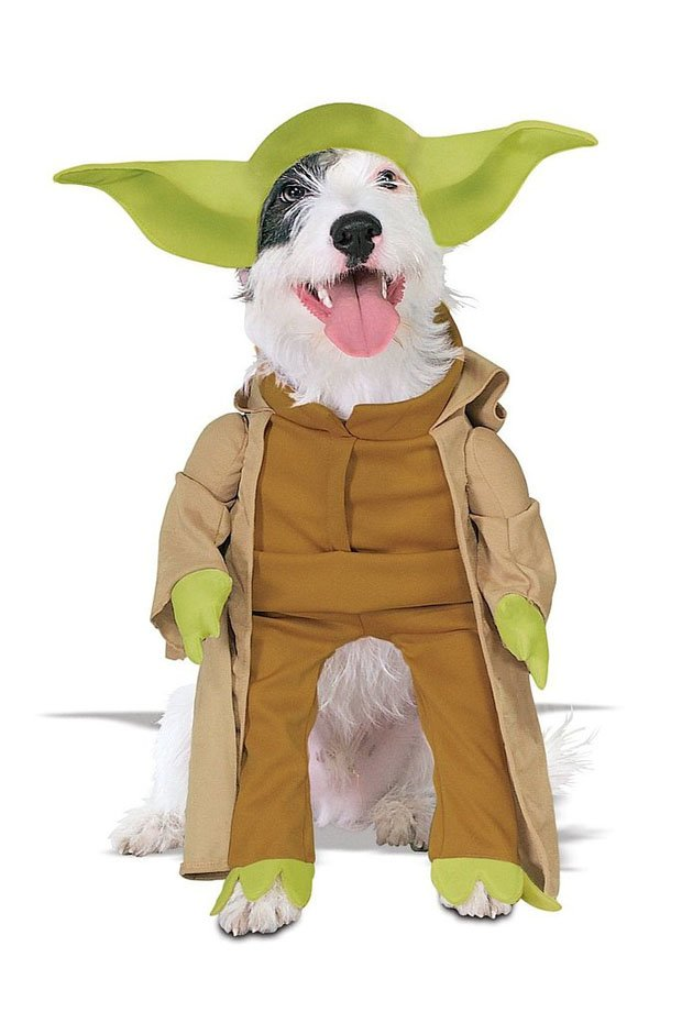 Beautiful Halloween Pet Costumes (15)