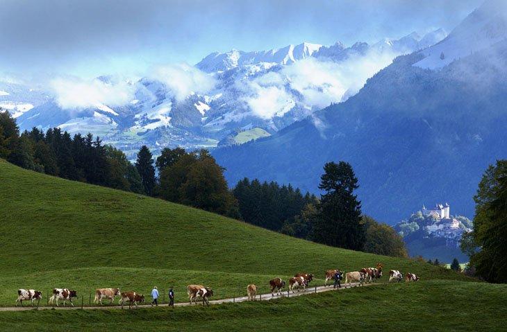 Make Swiss cheesemakers (20)
