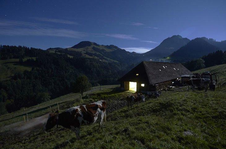 Make Swiss cheesemakers (19)