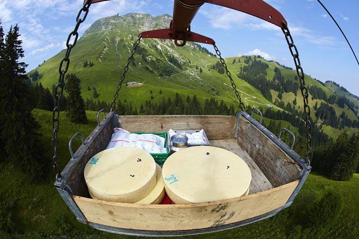 Make Swiss cheesemakers (7)