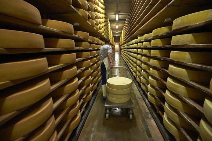 Make Swiss cheesemakers (6)