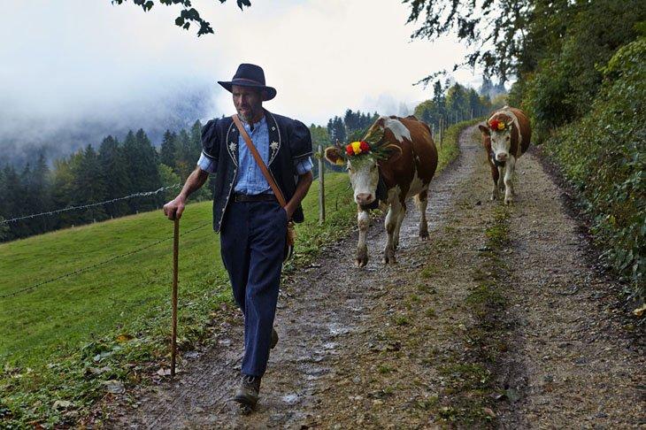 Make Swiss cheesemakers (4)