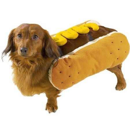 Beautiful Halloween Pet Costumes (11)