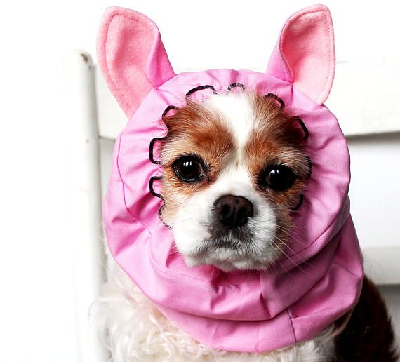 Beautiful Halloween Pet Costumes (10)