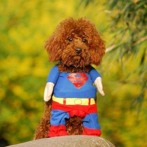 Beautiful Halloween Pet Costumes (8)