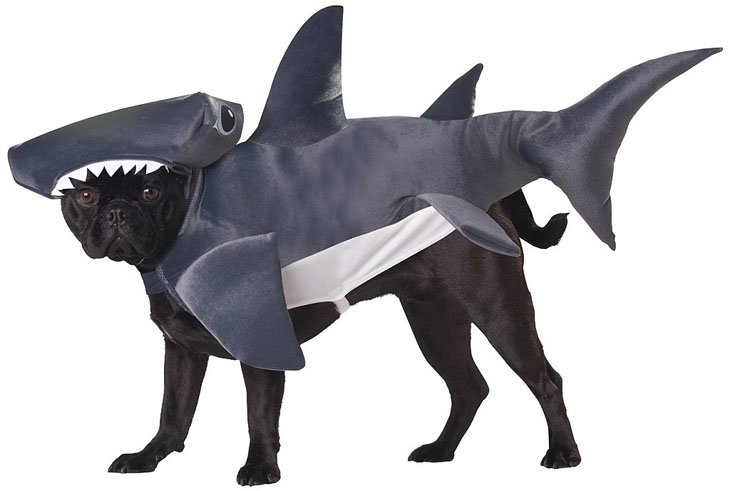 Beautiful Halloween Pet Costumes (7)