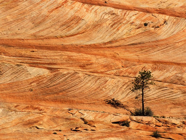 Zion National Park (5)