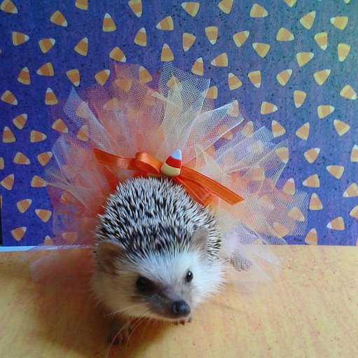 Beautiful Halloween Pet Costumes (5)