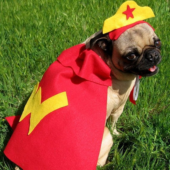 Beautiful Halloween Pet Costumes (3)