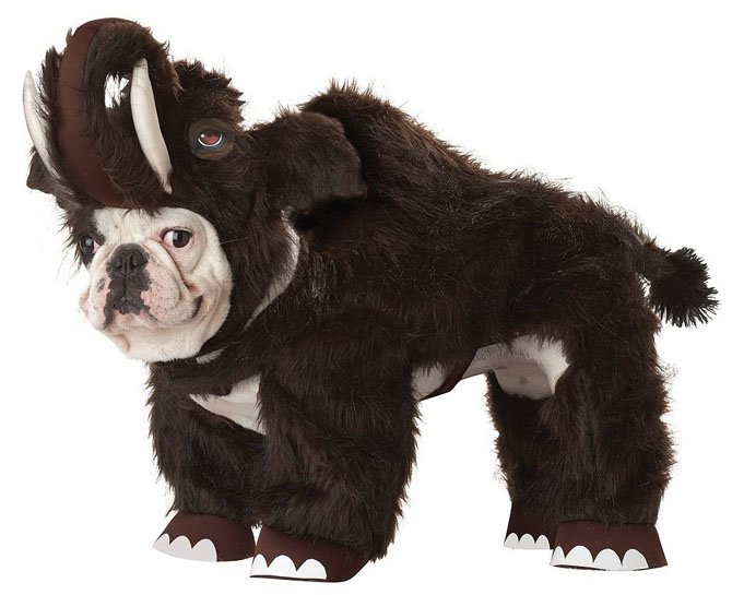 Beautiful Halloween Pet Costumes (1)